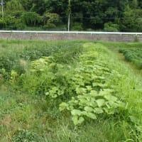 自然菜園スクール8月【長野校】自然菜園見学コース「夏野菜の仕立て方&自家採種」