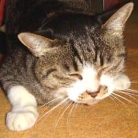 猫○人間× 一家の大黒小柱のおやじブログ