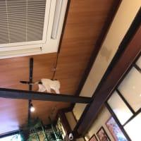 2019.11☆大阪~豆柴カフェ&三毛猫茶屋(≡^.^≡)♪