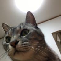 本日「ねこじい」映画 BSテレ東で 17:58から放送