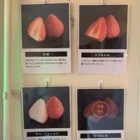 フルーツサンドの専門店が遂にオープン in FRUITMINE 馬車道本店