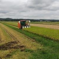 水稲種子の刈り取り・乾燥・調整作業が順調に行われています