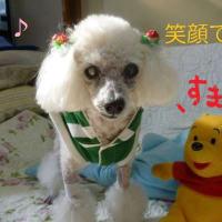 やっぱり笑顔がいいよね o(*^▽^*)o~♪