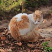 さすらいの風景 レバノンのネコ