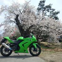 Ninja250Rで桜巡りプチツーリング