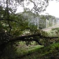 これってヤバイでしょ!嵐山町志賀 太陽光発電施設周辺崩落現場