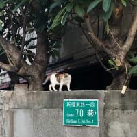 台湾訪問最終日〜面影を探して