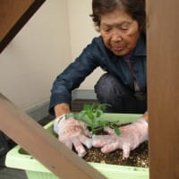 野菜作りを始めました。