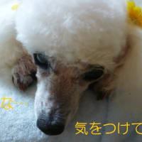 ヘバーデン結節にブシャール結節…(  ゚ ▽ ゚ ;)エッ!!  気になる台風のたまご