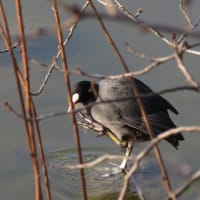 2月の鳥さん色々アーカイブ