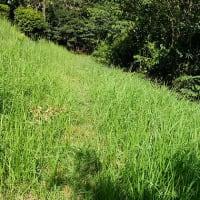9月中旬の森 7種のトンボ