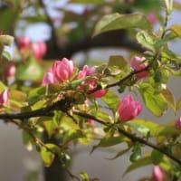 果樹の花その後