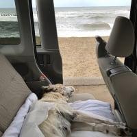 おじい犬の晩年記録・・・19(寝たきりドライブ)