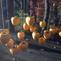 マイナス2.8℃の秋の日に甲州百目を吊るす。