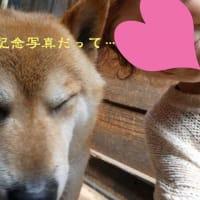 犬バカちゃんリン♪蕎麦屋の風鈴☆ お誕生日の犬シャン ビフォーアフターって、シャチョーさんのブログ!?