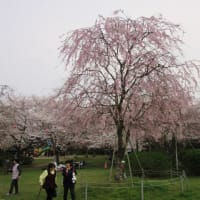 春のかしまです。桜は日本人のこころです! & <空飛ぶ鹿島灘の漁船?>