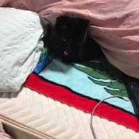 ひとり寝のジジィ