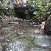 「下鴨神社」の「みたらし祭」最終日。あまりの長蛇の列に、ミモロは、自分なりのお浄めを