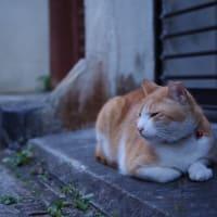 街猫清明(シーミーノコロノマチネコ)② Okinawan Cats #2239