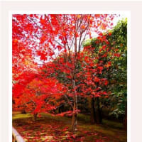 Colored leaves of 2014 Kyoto ~ Photo story