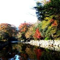 霜月もあと数日、晩秋の小春日和に紅葉 ( こうよう ) を見に行く