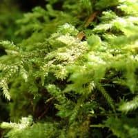 青木ヶ原樹海の自然