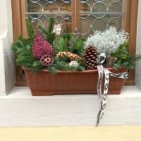 ドイツバタバタ旅行(5)クリスマスの花と怖い夢。