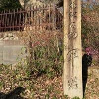恵那峡には芝桜と変わった桜の見えるスポットも