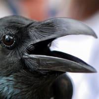 「鳥のダルマの素晴らしき花輪」より(5)