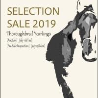 【セレクションセール2019(Seletion Sale、1歳)】~結果概要(売却率レコード!、最高額馬写真・動画、インタビュー映像など)
