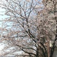 ベイサイド大村 お花見弁当&誕生会食