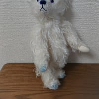 青い目のシロクマさん