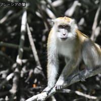 マレーシアのお猿さん