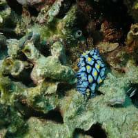 2月8日(土)スノーケルでも楽しめる海復活!珊瑚の森が沢山の魚や甲殻類の住処になったよ!!