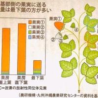 安全/安心/美味しい、健康野菜栽培。