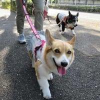 りりぃの散歩
