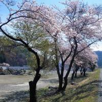 19-04-18 鵜住居川・気仙川