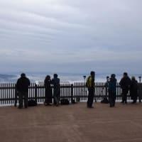 低い霧の海出現