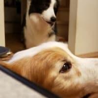 人&犬★好不調の波。。。