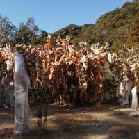 南国植物園と県南ジギング準備
