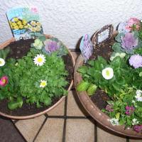 冬から春の寄植え鉢-H、F 作成