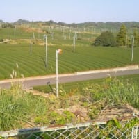 掛川茶イクリングで走るコース