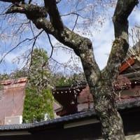 富県に春が来ました。