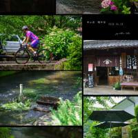 醒井宿の夏