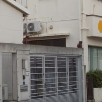 沖縄(*≧∀≦*)