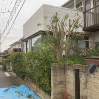 茨城県 龍ケ崎市 庭木の刈り込み 剪定抜根