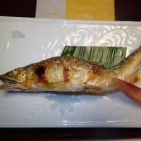 ぎふ長良川鵜飼をみた/「すぎ山」で長良川鮎塩焼きを食べた。