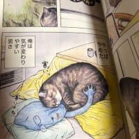 良い猫漫画だった「俺つしま」