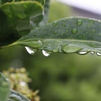 モクモクと - 雨に濡れ