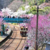 わたらせ渓谷鉄道と花桃まつり